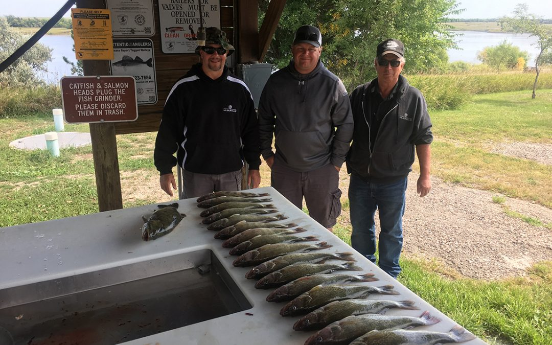 Nice walleyes caught in Lake Sharpe near Pierre