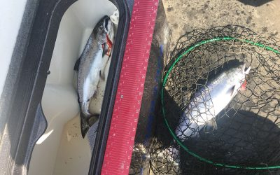 Oahe Salmon