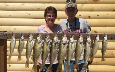 Nice Walleye for Mankato, Minnesota Couple