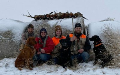 Great Winter for the Pheasant Population